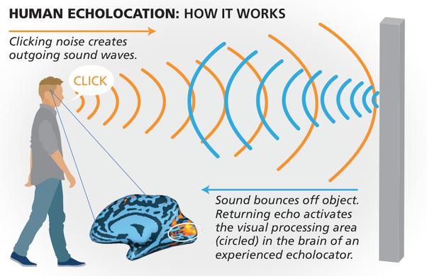 Echolocation – Hidgi Chuan